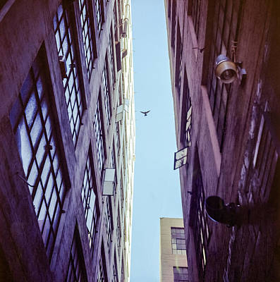 Bird Flying Above The Buildings Poster