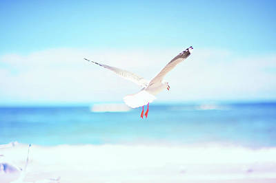 Bird Flying In Beach Poster