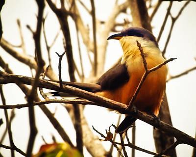 Bird In The Bush Poster