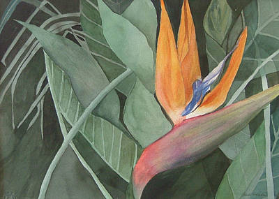 Bird Of Paradise Poster by Heidi Patricio-Nadon