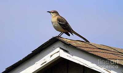 Bird On A Roof Poster