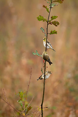 Bird Stack Poster by Dan Wells
