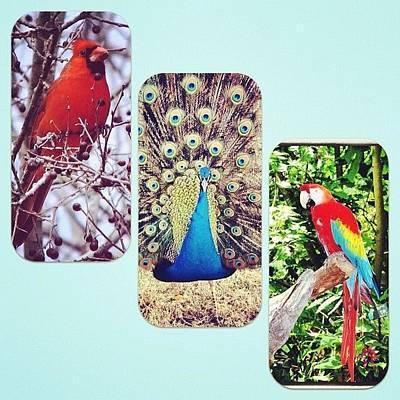 Birds Around Houston Poster
