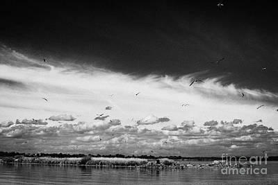 Birds Flying Above Small Roes Island One Of The Many Flat Shallow Areas Of Lough Neagh  Poster