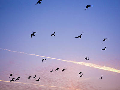 Birds Flying At Sunset Poster
