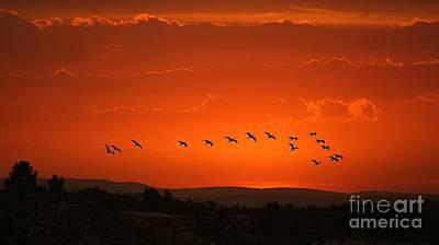 Poster featuring the digital art Birds In A Crimson Sunset by John  Kolenberg