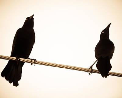 Birds In Black Poster