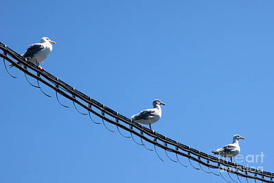 Poster featuring the photograph Birds On A Wire by Michelle Joseph-Long