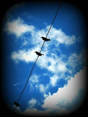 Poster featuring the photograph Birds On A Wire by Robin Dickinson