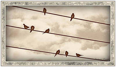 Birds On Wires Poster by Susan Kinney