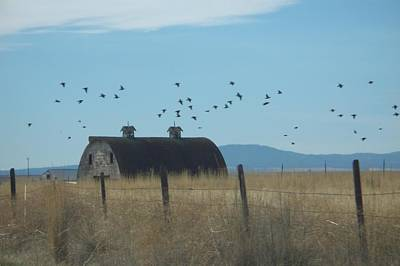 Poster featuring the photograph Birds Over Barns by Debbi Saccomanno Chan
