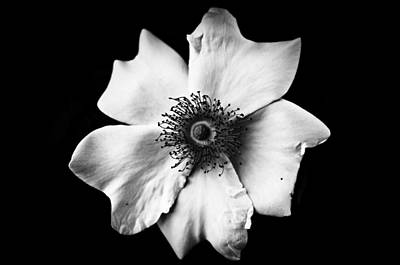 Black And White Flower Poster