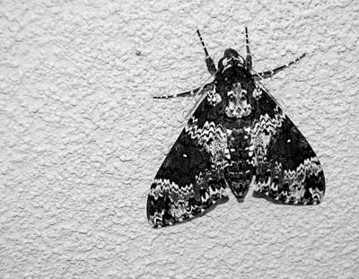 Black And White Moth Poster