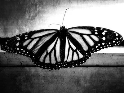 Poster featuring the photograph Black Butterfly by Julia Wilcox