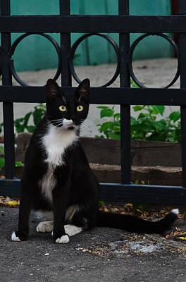 Black Cat On Black Background Poster