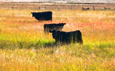 Black Cattle Golden Field Poster by Jennie Marie Schell
