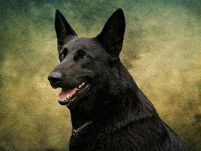 Black German Shepherd Dog IIi Poster by Sandy Keeton