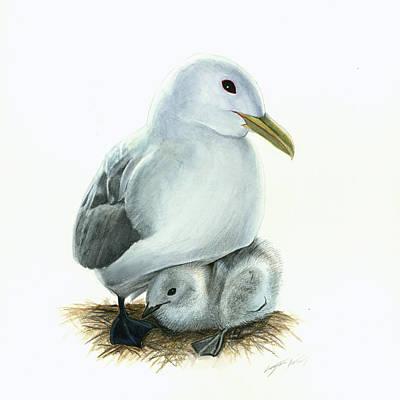 Black-legged Kittiwake Parent And Chick Poster