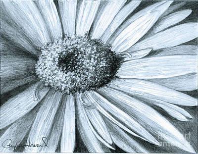 Black White Gerber Poster by Phyllis Howard