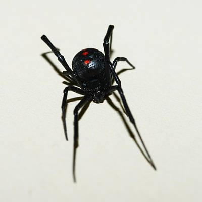 Black Widow Polka Dots Poster