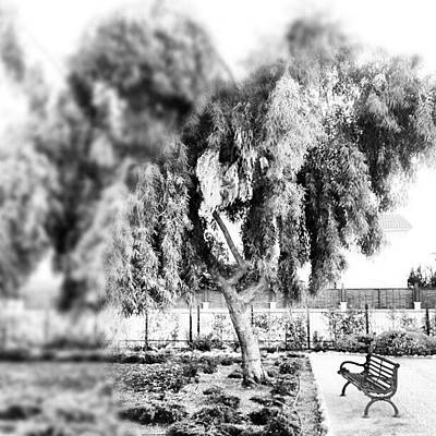 #blackandwhite #bnw #bw #trees #chair Poster