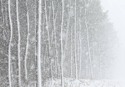 Blizzard Blankets Trees In Snow Poster by Douglas MacDonald