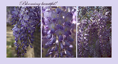 Poster featuring the photograph Blooming Beautiful by Taschja Hattingh