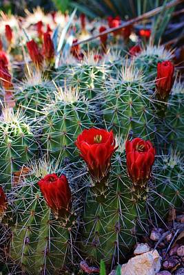 Blooming Cactus Poster by Bruce Bley