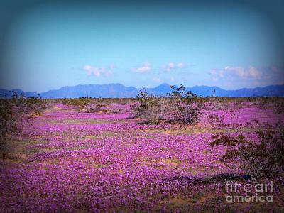 Blooming Desert Verbena Poster