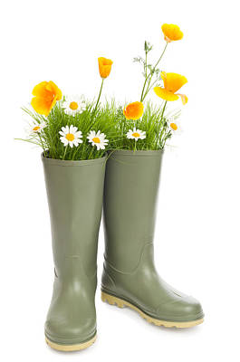 Blooming Wellington Boots Poster by Amanda Elwell
