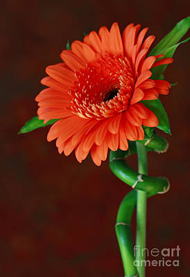 Blooming With Joy Poster by Inspired Nature Photography Fine Art Photography