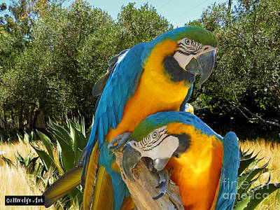 Blue And Gold Macaws Poster by Methune Hively