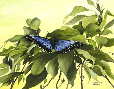 Blue Butterfly Of Branson Poster