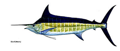 Blue Marlin Poster by Kevin Brant