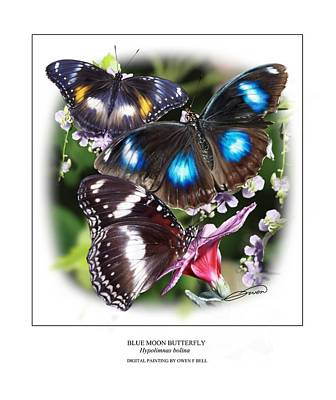 Blue Moon Butterfly Poster by Owen Bell