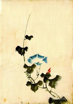 Blue Morning Glory Vine 1840 Poster by Padre Art