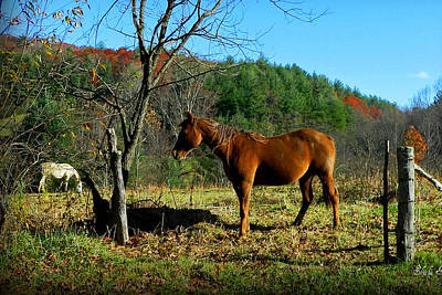 Blue Ridge Mountain Horses Poster