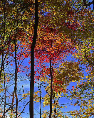 Blue Sky Autumn Poster