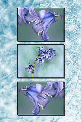 Poster featuring the photograph Bluebell Triptych by Steve Purnell