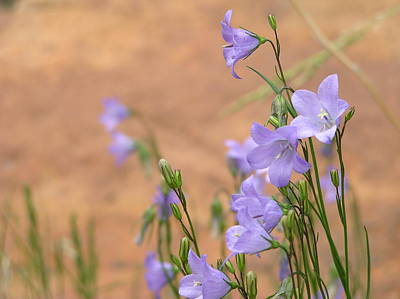 Bluebells And Red Rock Poster