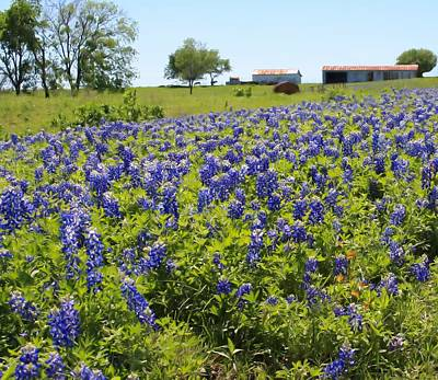 Poster featuring the photograph Bluebonnet Farmhouse by Lynnette Johns