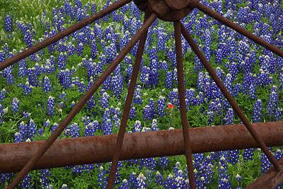 Bluebonnets And Rusted Iron Wheel Poster