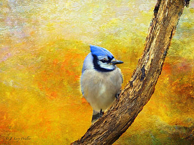 Bluejay Peeking Poster by J Larry Walker