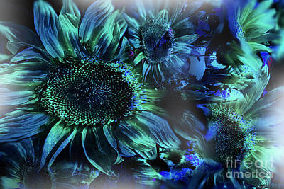 Blushing Sunflowers Poster