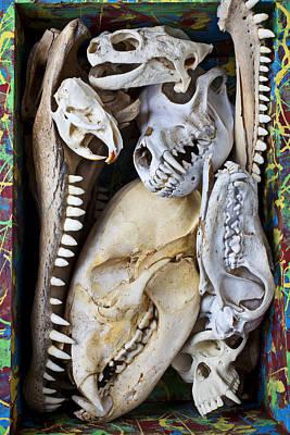 Bone Box Poster