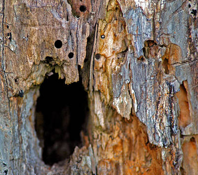 Bored By Woodpeckers Feeding Poster