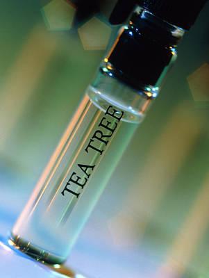 Bottle Of Essential Oil From Tea Tree Poster by Steve Horrell