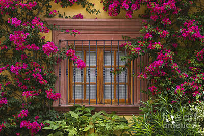 Poster featuring the photograph Bougainvillea Window by Craig Lovell