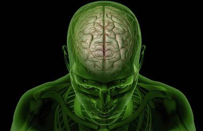 Brain Arteries Poster by MedicalRF.com