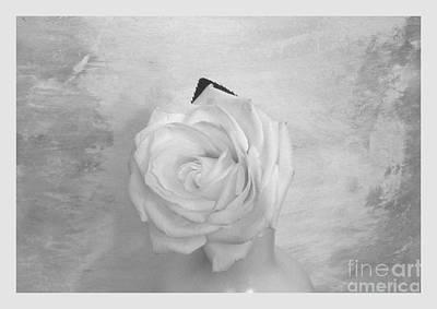 Bridal White Rose Poster